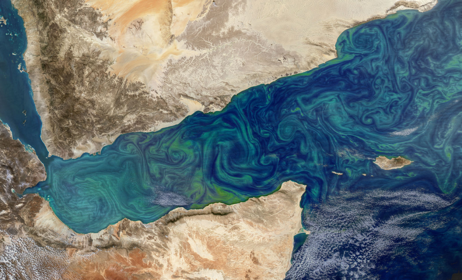 Swirls of algae in the western Indian Ocean