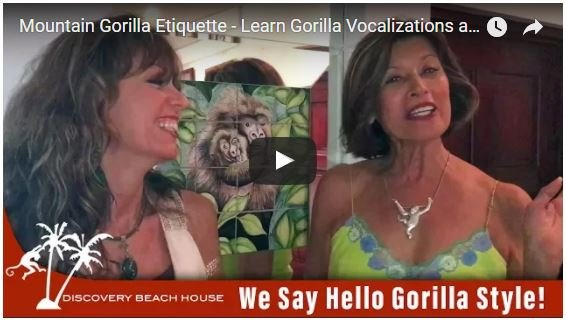 Mountain Gorilla Etiquette – Learn Gorilla Vocalizations and Gorilla Safety Tips