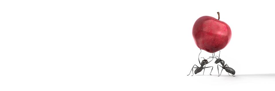 AntsCarryingApple1.2