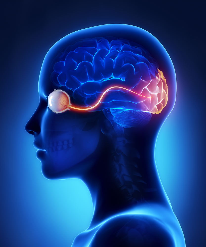 The Optic Nerve And Its Visual Link To The Brain Discovery Eye