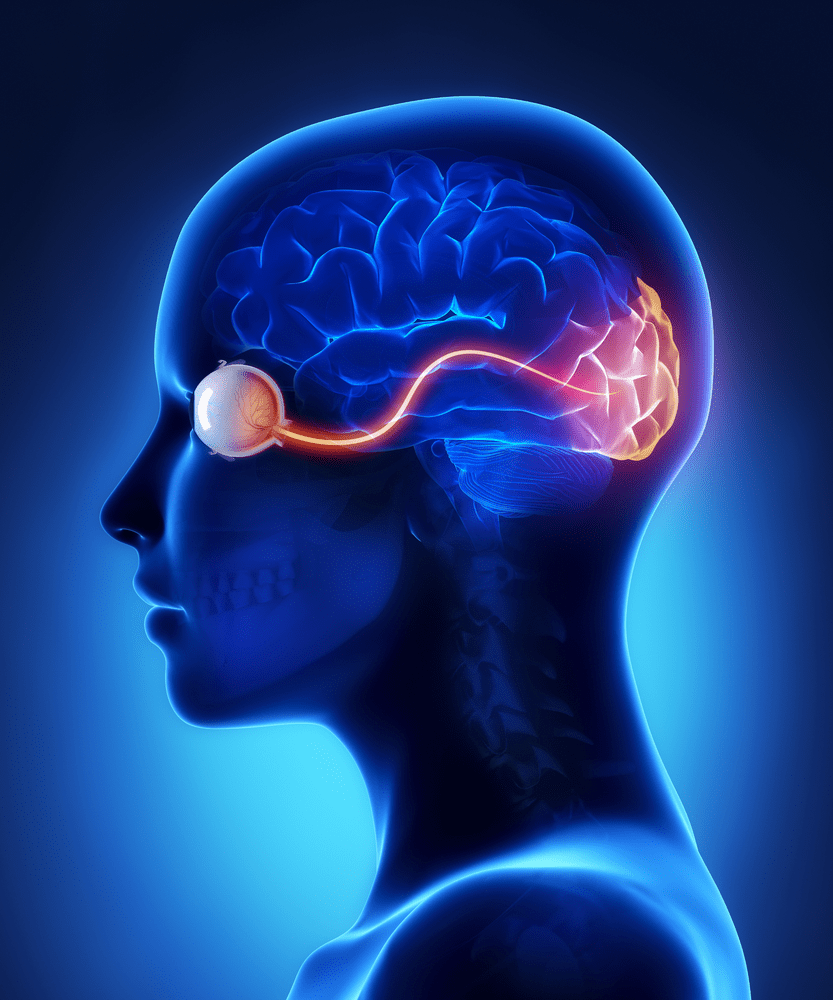 The Optic Nerve And Its Visual Link To Brain Discovery Eye Human Body Diagram Outline Click For Details In Retinal Tissues Of More Than 23 Types Rgcs Vary Significantly Terms Their Morphology Connections Responses