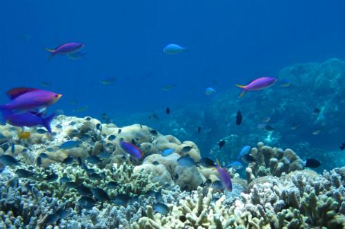 diving in indonesia bunaken