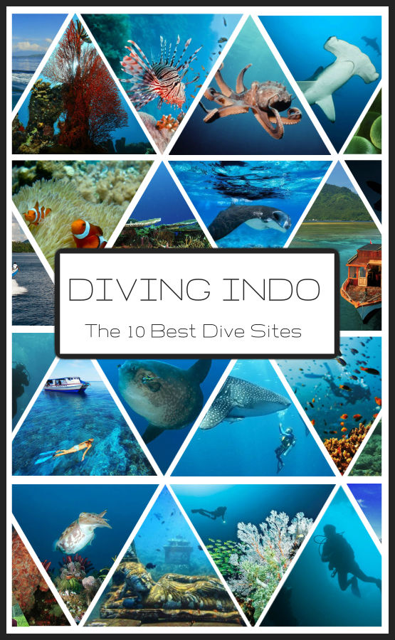 Diving in Indonesia The Ultimate Guide to the Worlds Best Dive Spots Bali Komodo Sulawesi Papua and more