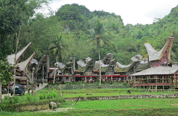 things to do in toraja