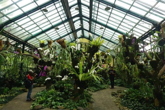 orchid house in Bogor Botanical garden