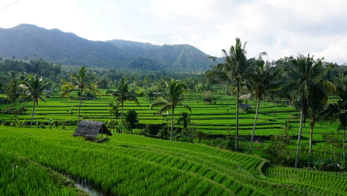 on the way back from Karangasem to Ubud