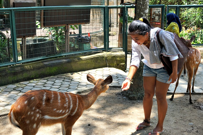 Bali Zoo experience with The Sanctoo villa