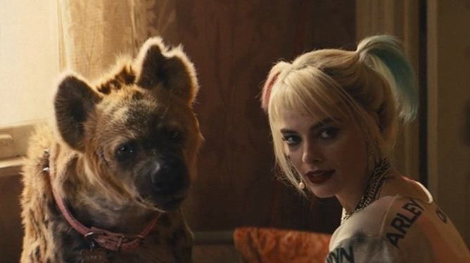 Margot Robbie as Harley Quinn sits with her pet hyena as seen in BIRDS OF PREY, coming in at number 3 in our DCEU ranking from worst to best.