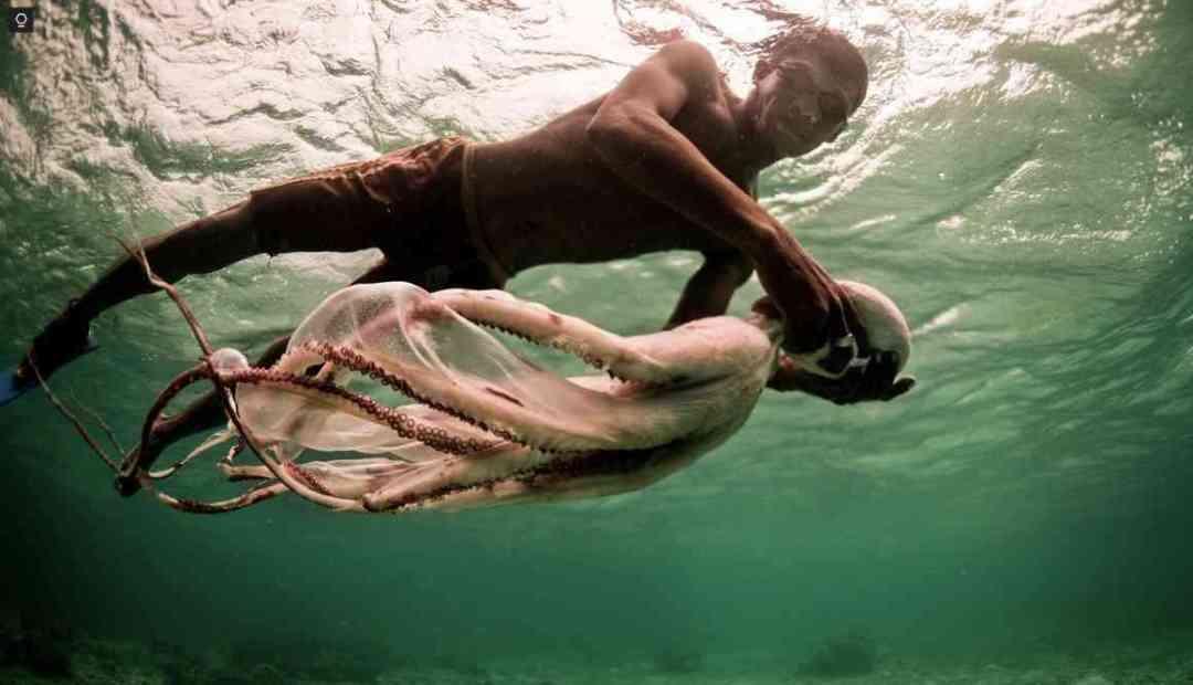 Borntodive:TheBajauseanomadsspend%oftheirdayunderwater