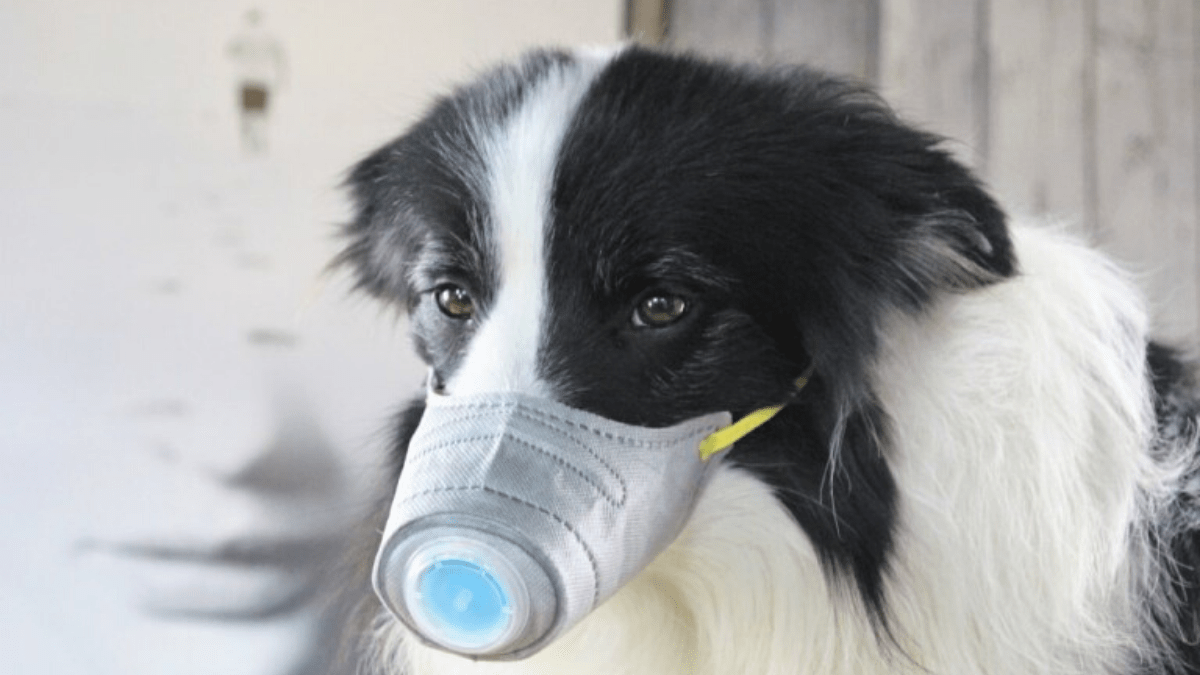 Coronavirus face masks for dogs and cats