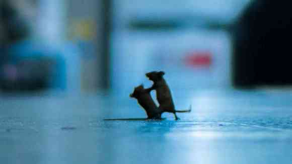 Subway mice wins People's Choice Wildlife Photographer of the Year award