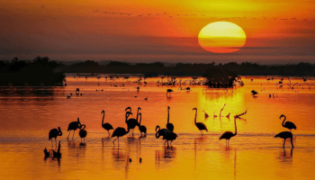 Flamingos form lasting friendships, study finds