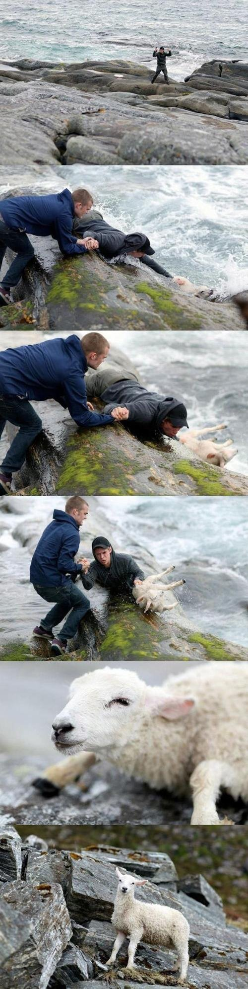 3. This picture of two Norwegian guys rescuing a sheep from the ocean