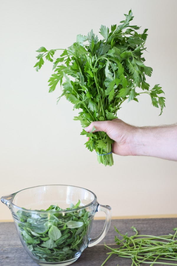 parsley being held over a bowl of basil