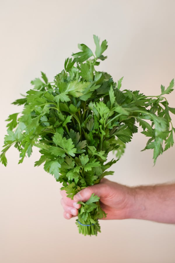 Male hand holding a bouquet of parsley
