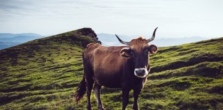 La ONU, las vacas y el clima: otro baño de irrealidad