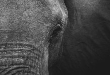 Pensar contra un elefante