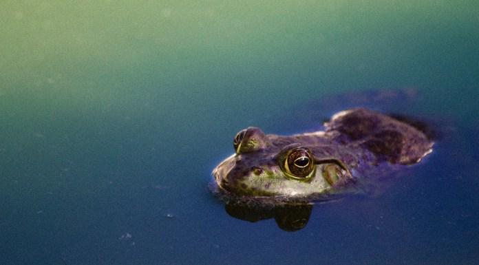 El 'síndrome de la rana hervida' o cómo acabar con el control judicial