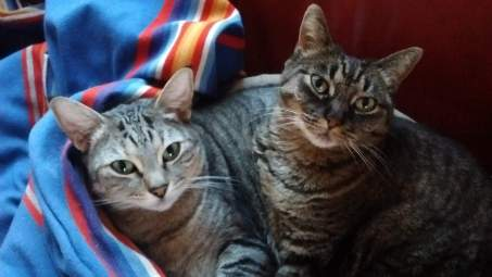 two tabby cats on a brightly striped blanket