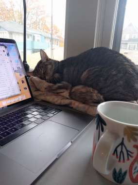 a gray tabby sleeping next to a laptop and tea cup