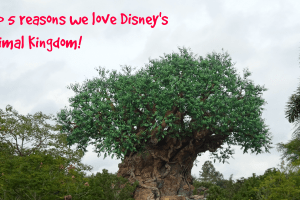 Top five reasons we love Disney's Animal Kingdom 15