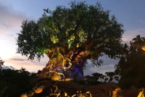 5 Rookie Mistakes to Avoid at Disney's Animal Kingdom 23