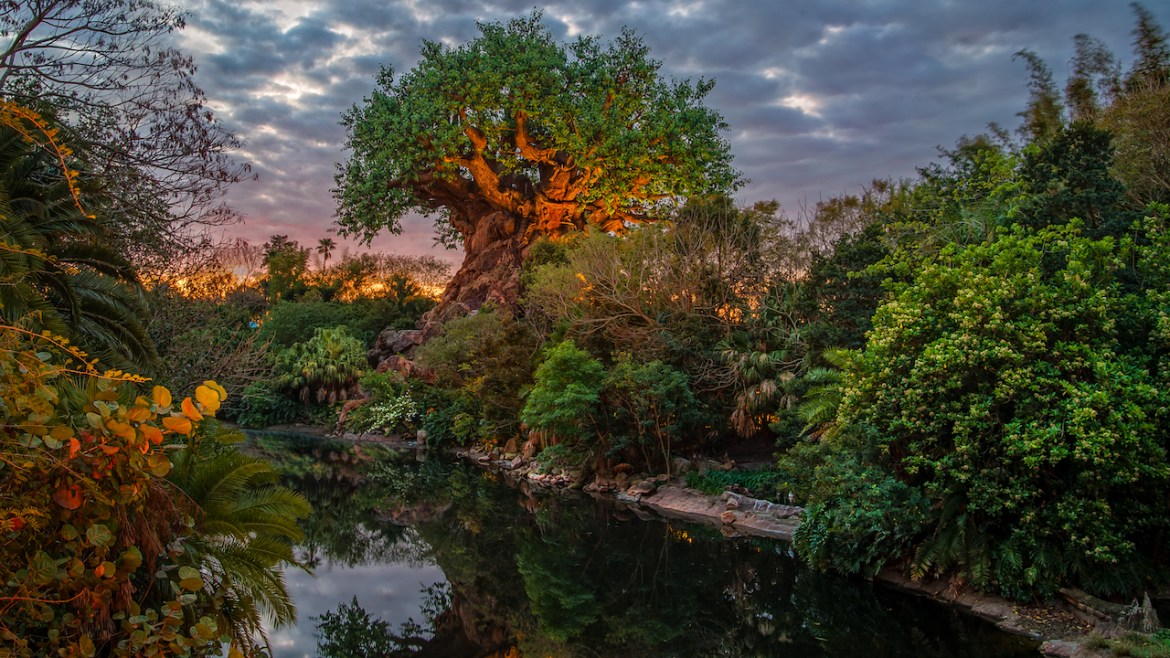 Top 8 Animal Kingdom Attractions and Rides for Expectant Mothers