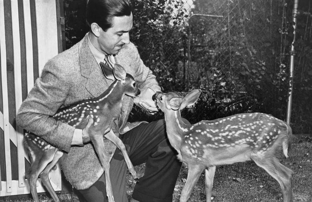 5 Fan Favorite Facts about Bambi