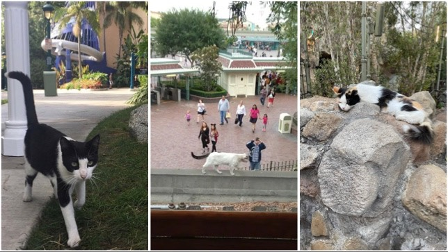 When The People Are Away, The Disneyland Cats Will Play!