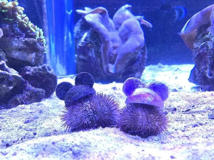 The Seas With Nemo And Friends Celebrates Disney World 50th Anniversary