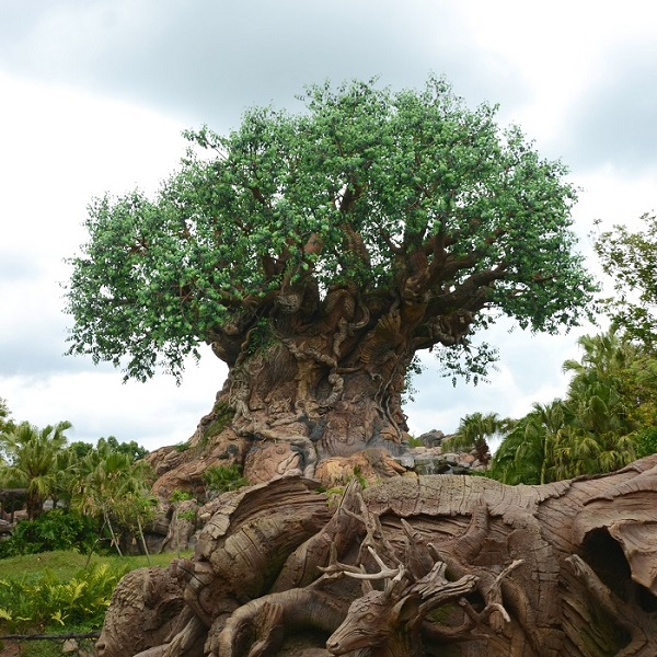 Tips for visiting Animal Kingdom at Walt Disney World. A beginner's guide to park basics, the best food and snacks, top rides, and - of course - Pandora. #disney #disneyworld #animalkingdom #pandora #disneydeciphered