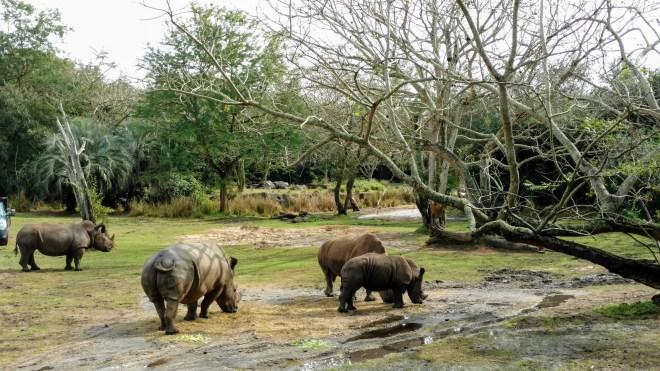 Kilimanjaro Safaris Rhinos