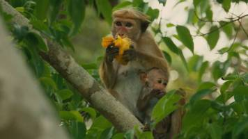 Disneynature Monkey Kingdom 5