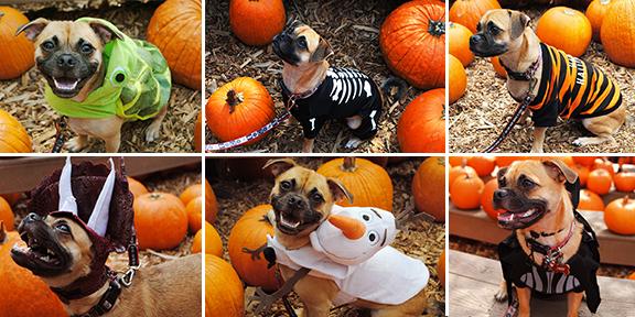 Top Picks For Disney Inspired Halloween Pet Costumes