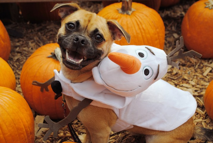 Disney Halloween Pet Costumes Olaf