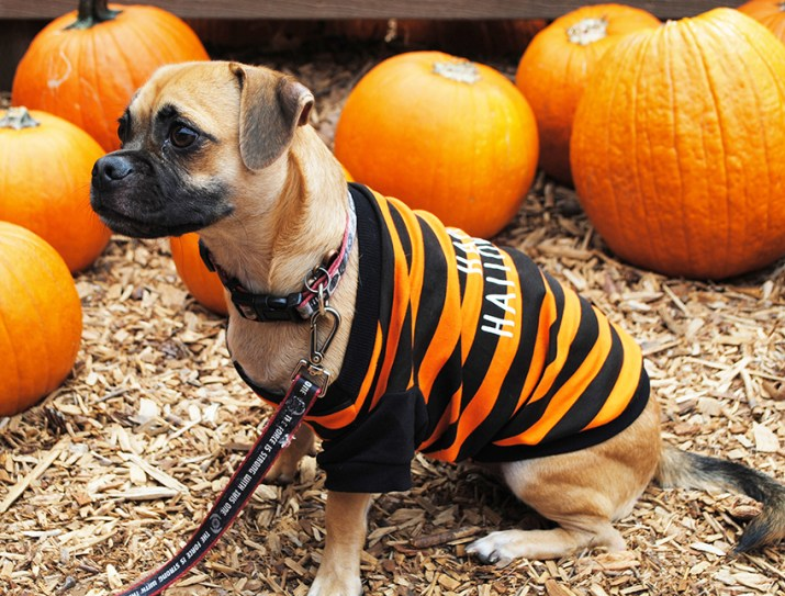 Disney Halloween Pet Costumes Tigger