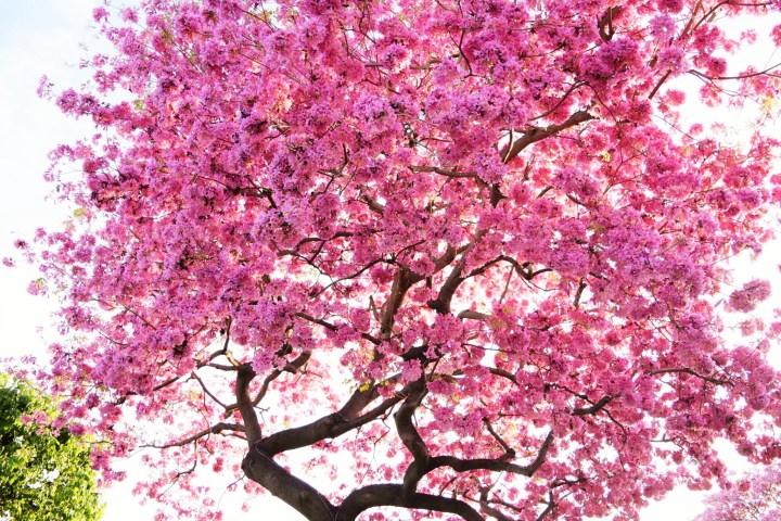 Cherry Blossom Partners 1