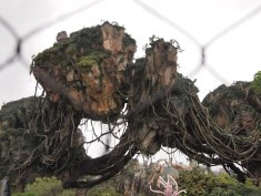 Pandora World of Avatar Grand Opening Coverage DisneyExaminer Floating Mountains
