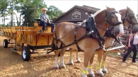 04-wdw-tri-circle-d-ranch-horse-500x281