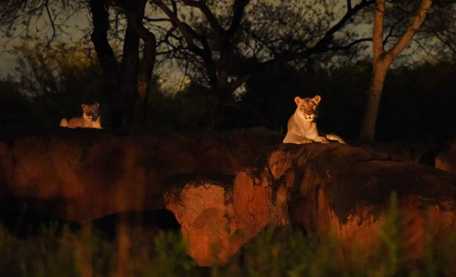 Kilimanjaro-Safaris_Full_27547