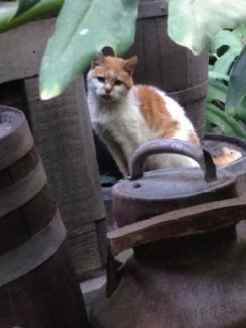 Lucian the Disneyland Cat by Indiana Jones and the Jungle Cruise