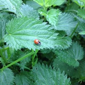 biodiversite¦ü