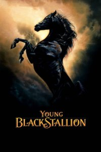 "Poster for the movie ""Young Black Stallion"""