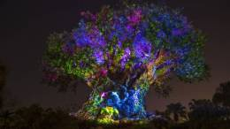 Disney Animal Kingdom Night Hours