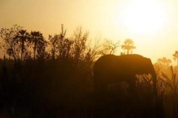 disney safari night