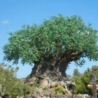 Tree of Life (Disney World)