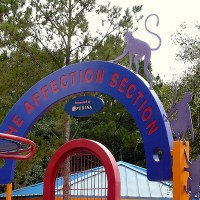 Affection Section (Disney World)