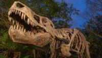 Dino Sue (Disney World)
