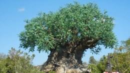 Tree of Life (Disney World)