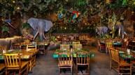 Rainforest DTD